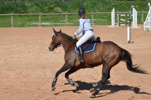 horse-806397_960_720